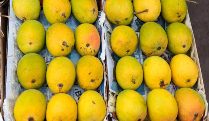Mango :: Fruits Grading Solutions :: Marsh Harrier